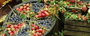 Früchte zum Erntedankfest
