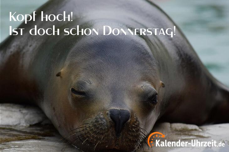 Lustiger Spruch zum Donnerstag - Kopf hoch...